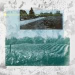 Hillier Estates Vineyard screenprint on aluminum